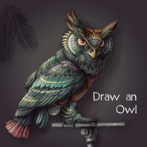 owl drawing contest