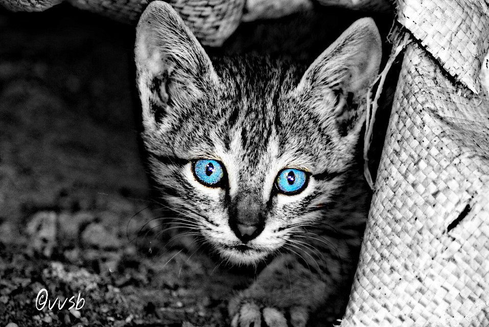 are you lookin at me.??   shooooo...get outa here ....;)  :).  #wapfurryfriends #color splash #cute #photography #petsandanimals #blue