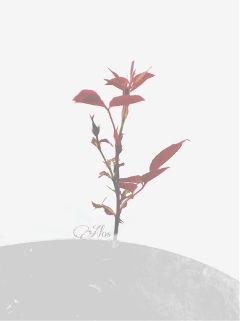black & white photography nature flower minimalist