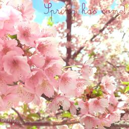 hellospring flower nature spring