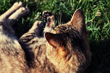 cat photography pets & animals love nikon