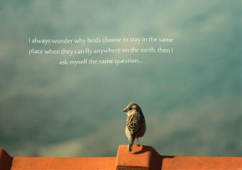 nature quotes & sayings vintage birds macro