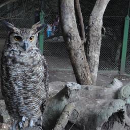 nature pets & animals photography animals owl