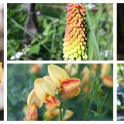 color splash garden collage colorful flower