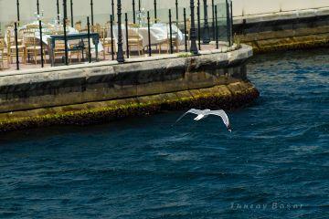 istanbul nature photography worldphotoday seagull