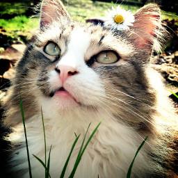 pets & animals cat