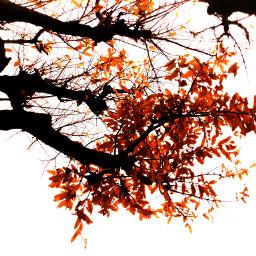 fall nature hdr