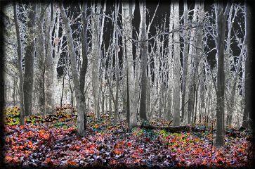 nature emotions autumn missingmom