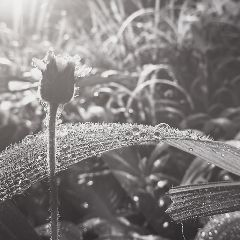 black emotions flower nature quotesandsayings