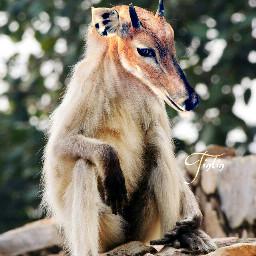 oldphoto photography petsandanimals animals animalhybrid