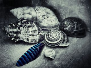 nature detail snail blue colorsplash