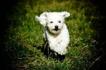 dog mydog winter maggie run