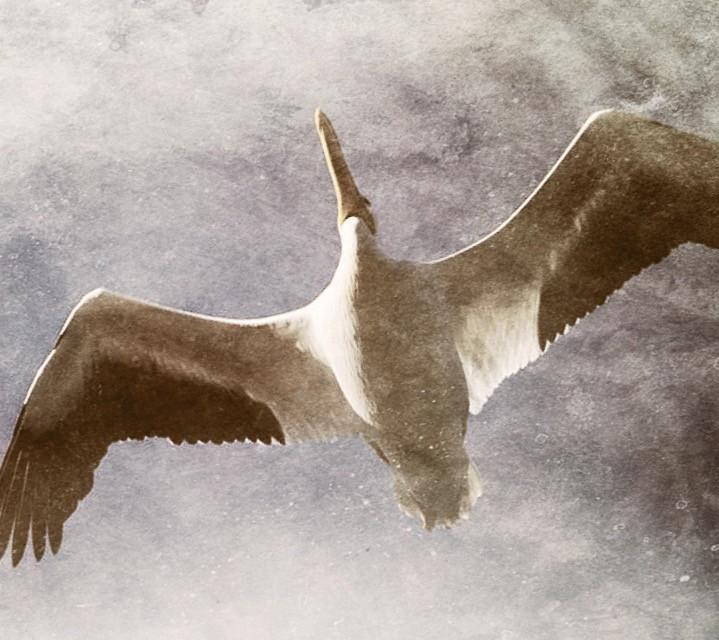 #flight #birds