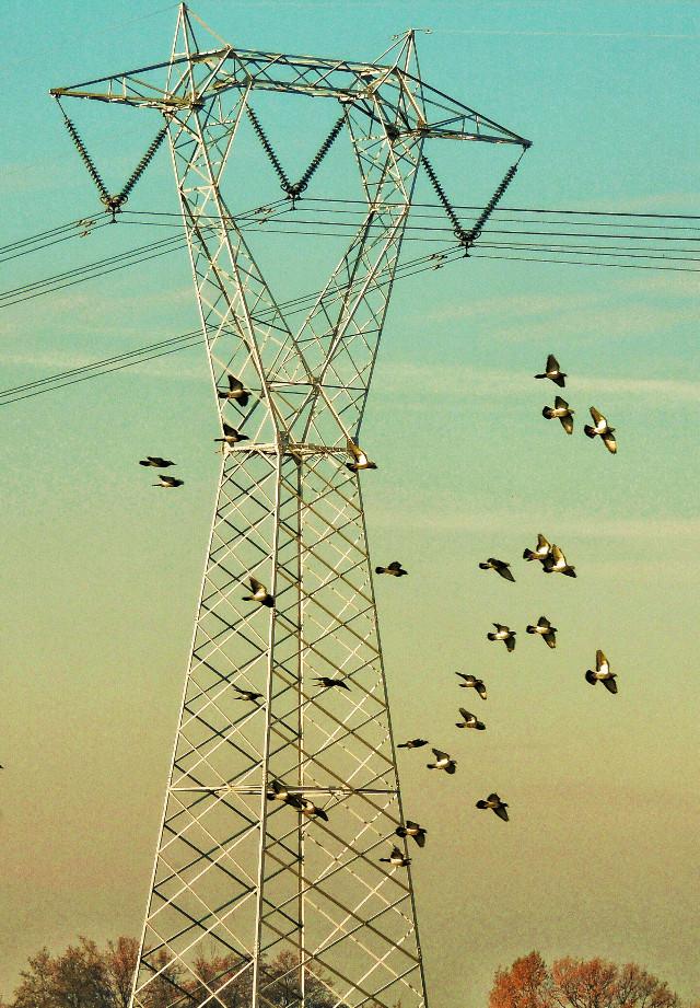 #birds http://blog.picsart.com/post/feathery-photo-spectacular-bird-shots