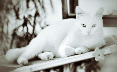 wapwhite petsandanimals cat monochrome