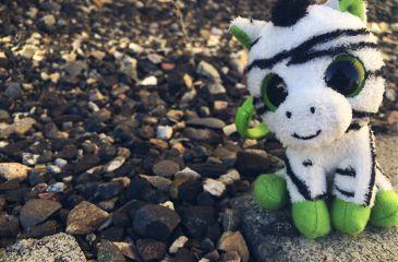 zebra toy winter nature interesting