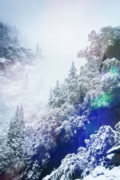 cold snow freezing forest