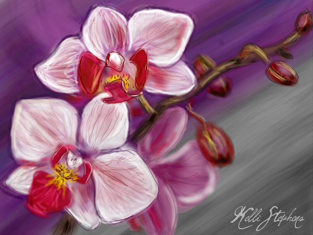 orchid drawing contest winners