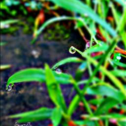 nature rain colorful dews photography