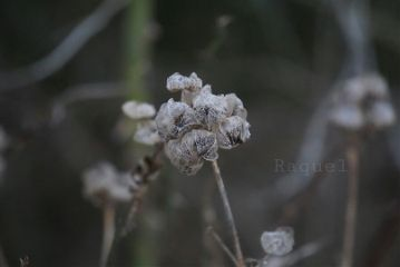 photography nature love plant