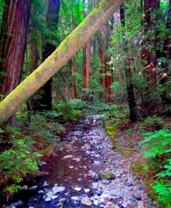 nature hiking outdoors adventure forest