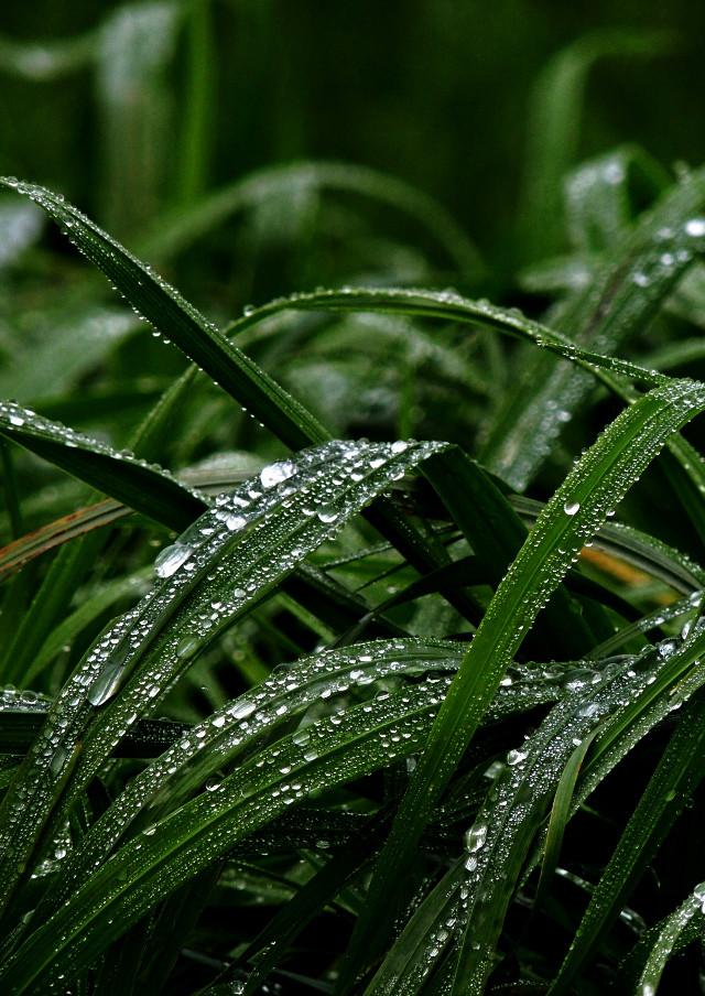 #plant #wapgreen #raindrops http://blog.picsart.com/post/photo-gallery-of-plants