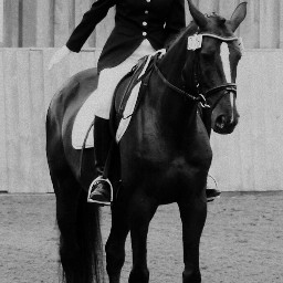 dressage horses competitions sports horseriding wppsports