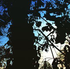 japan nature sky trees art